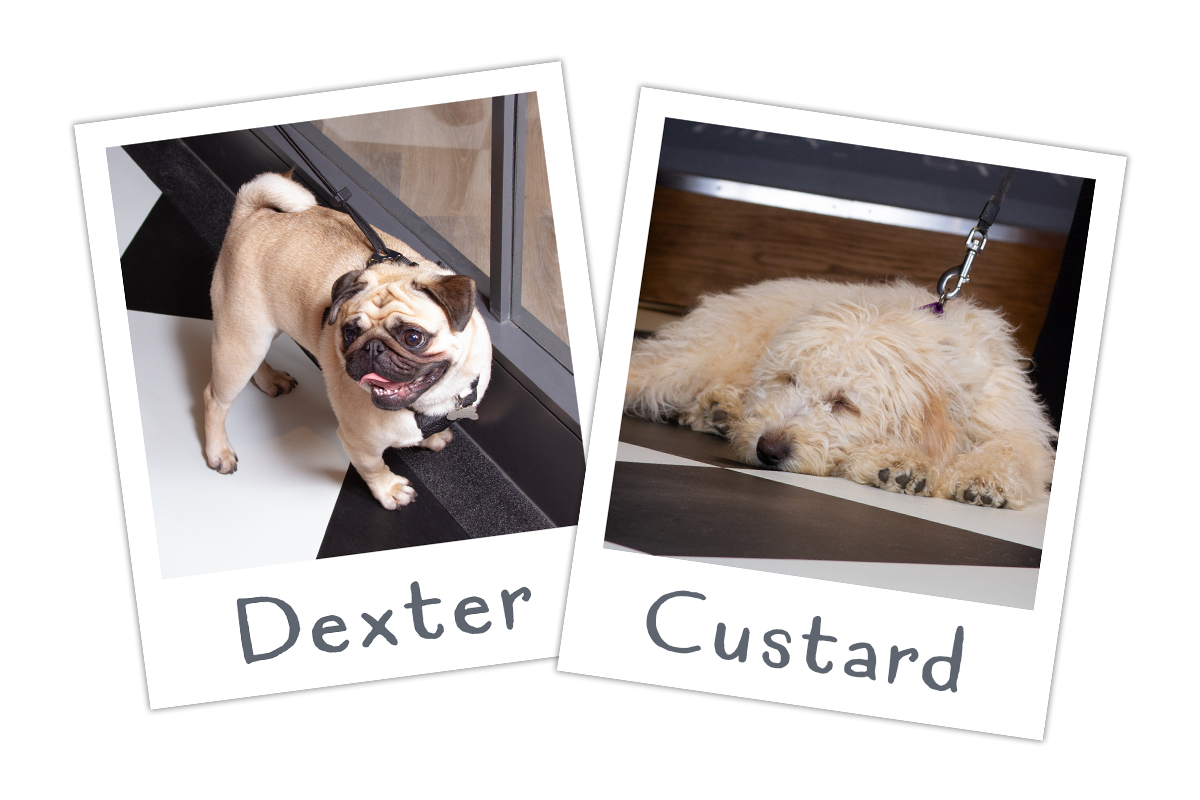 Dexter and Custard