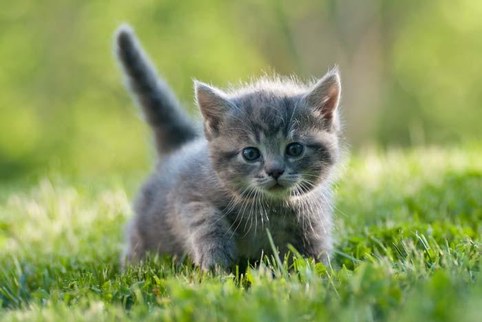 kittens lessons tes teach
