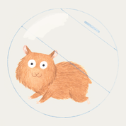 All About Syrian Hamsters | Petopedia