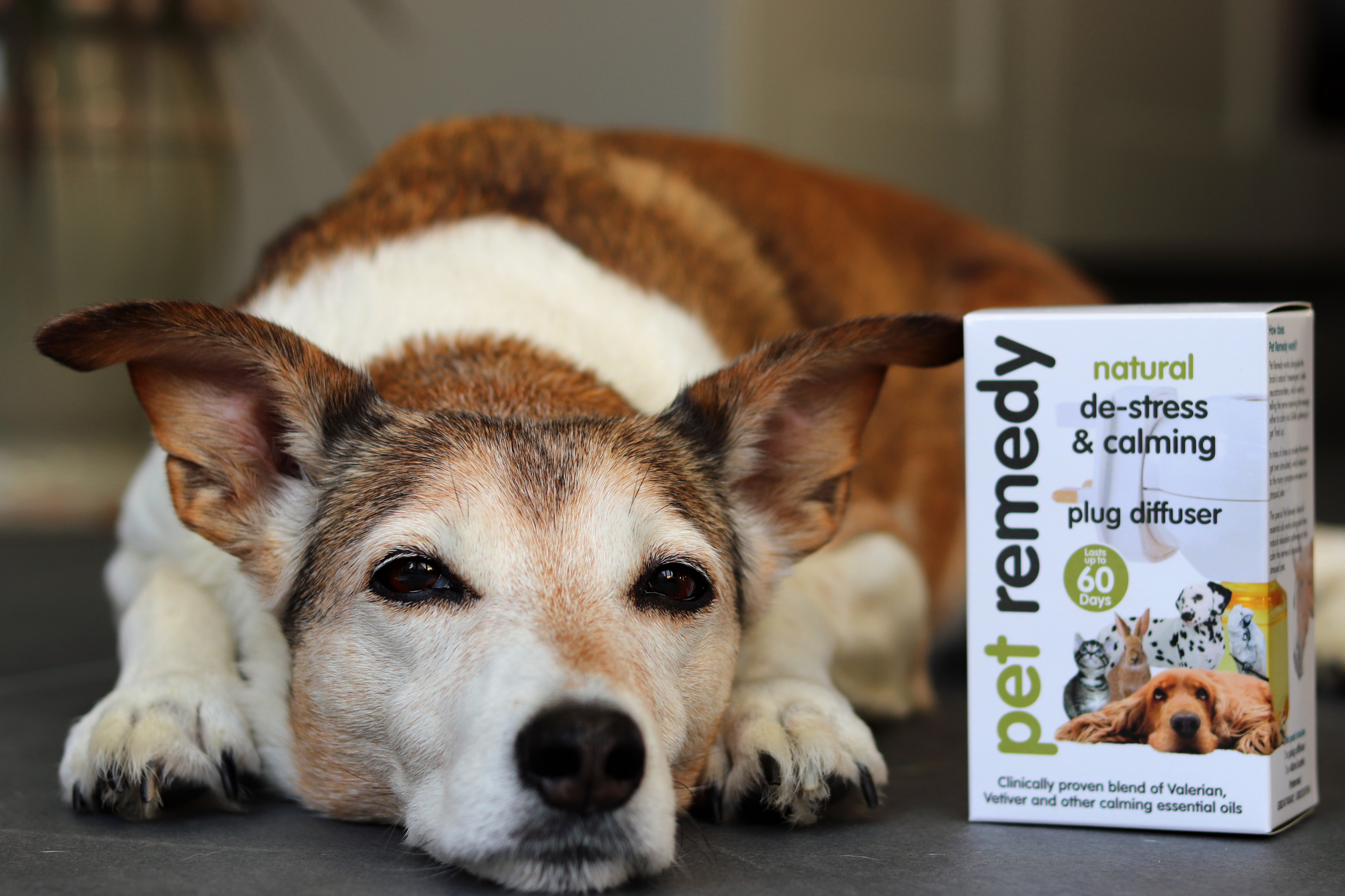 Pet Remedy - Natural Calming